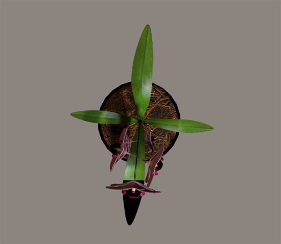 Picture of Orchid Plant Poser Model / Prop