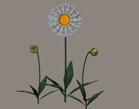 Picture of Daisy Plant Models