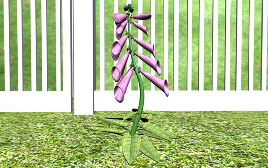 Picture of Foxglove Plant Model