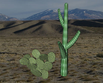 Picture of Cactus Plant Models