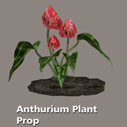Picture of Anthurium Plant Prop