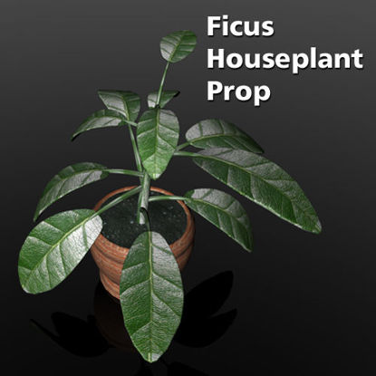 Picture of Ficus House Plant Prop