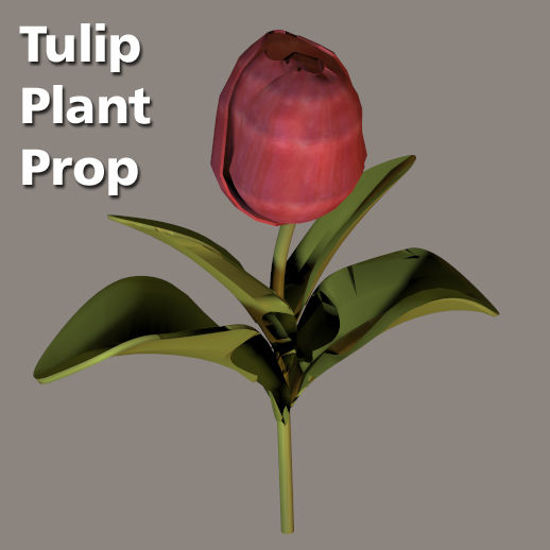 Picture of Tulip Plant Prop